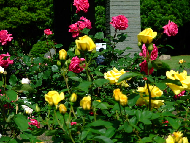 Blog2012_05230014