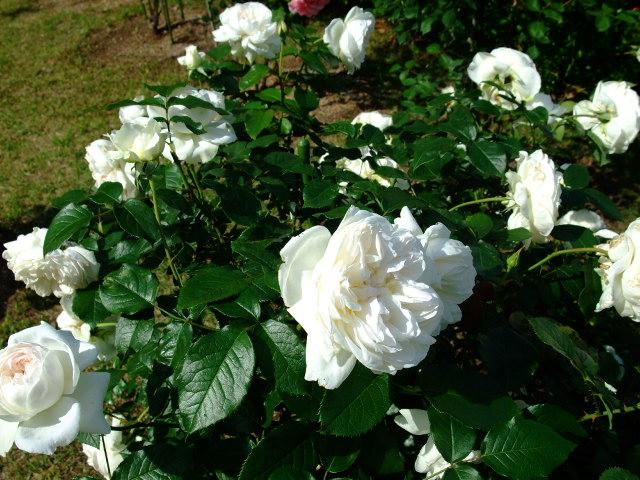 Blog2012_05230016