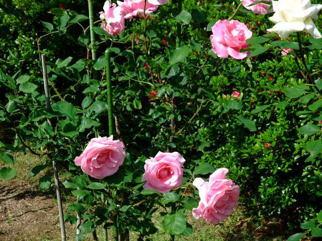 Blog2012_05230017