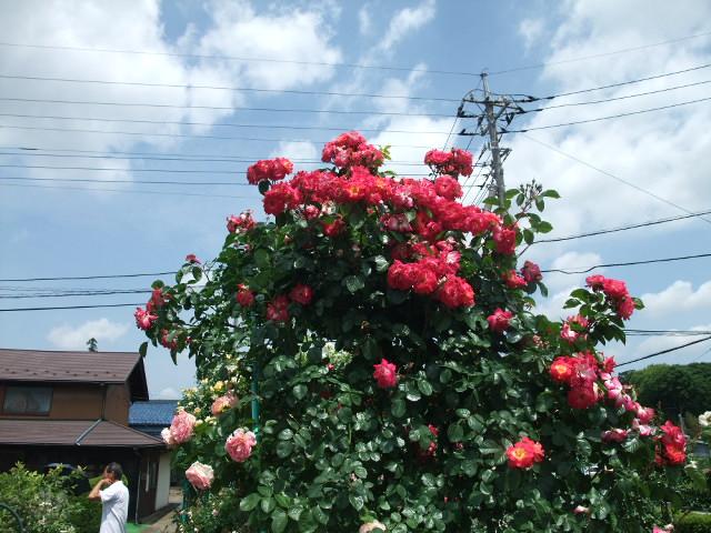 Blog2012_05300014
