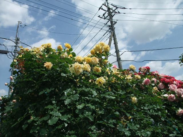 Blog2012_05300015