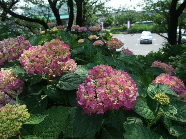 Blog2012_06040034