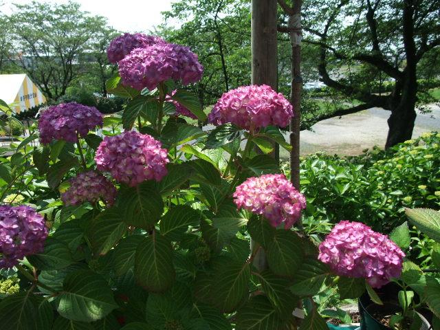Blog2012_06040037