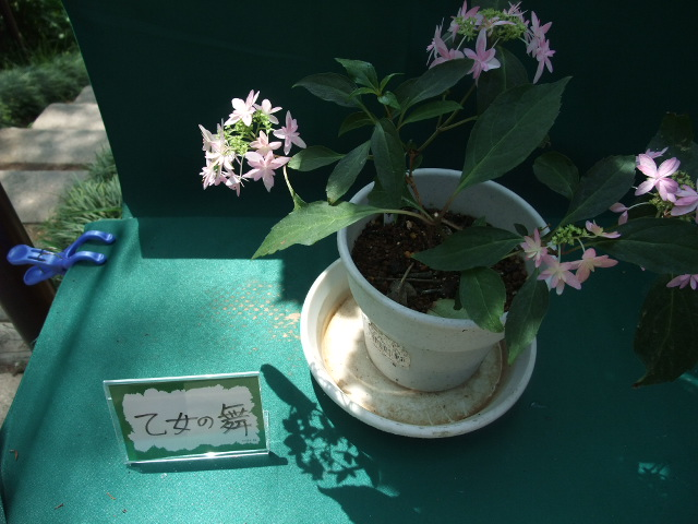 Blog2012_06040044