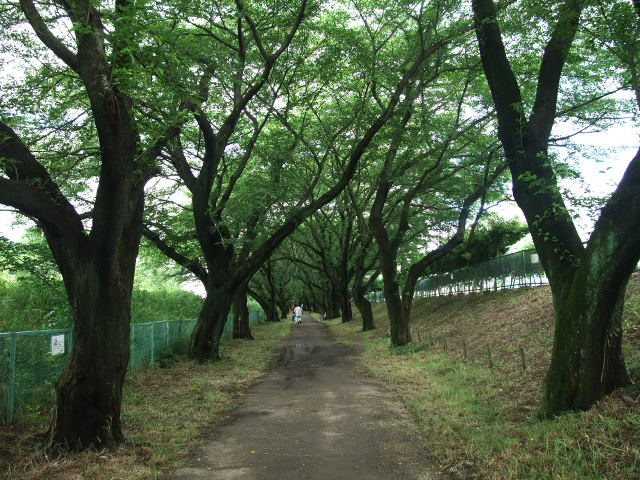 Blog2012_06100023