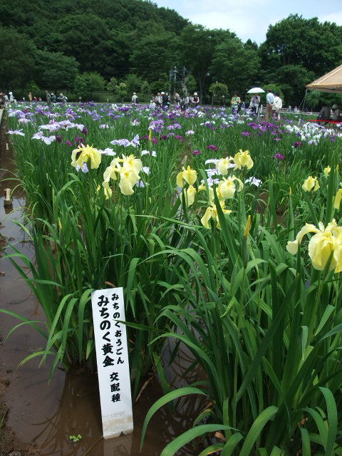 Blog2012_06140039