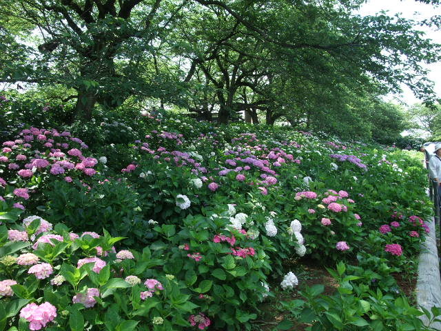 Blog2012_06180054