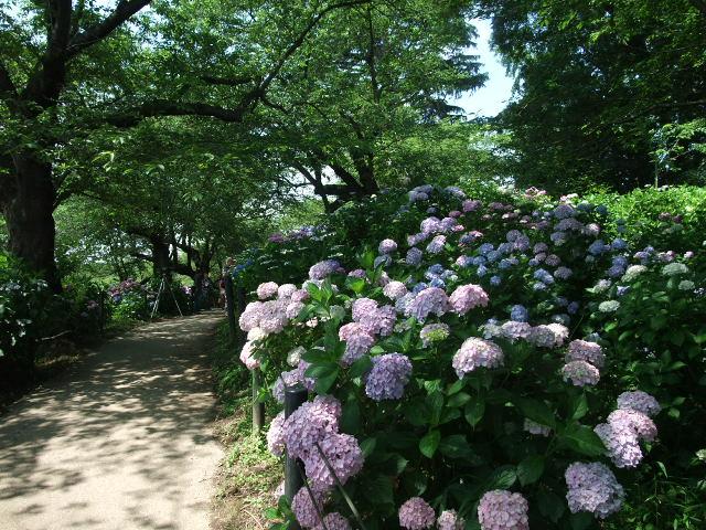 Blog2012_06180056