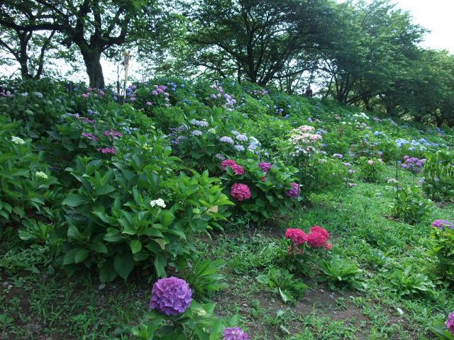 Blog2012_06180072
