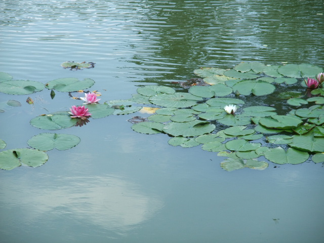 Blog2012_06180073