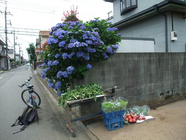 Blog2012_06230014