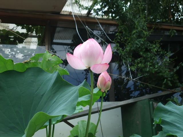 Blog2012_08010020