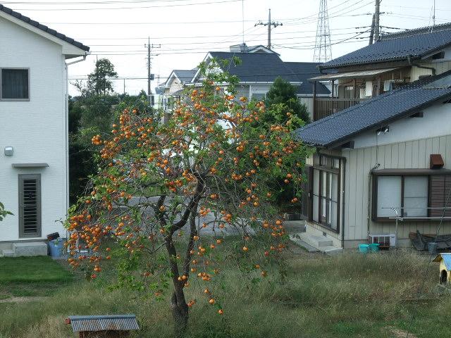 Blog2012_10220019
