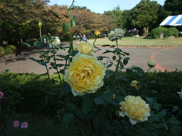 Blog2012_10260017