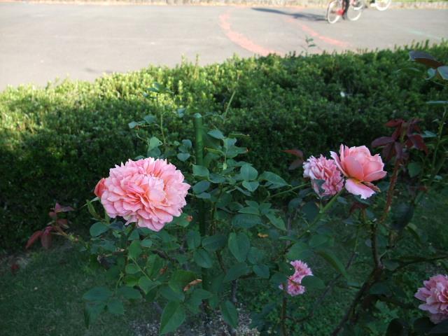 Blog2012_10260018