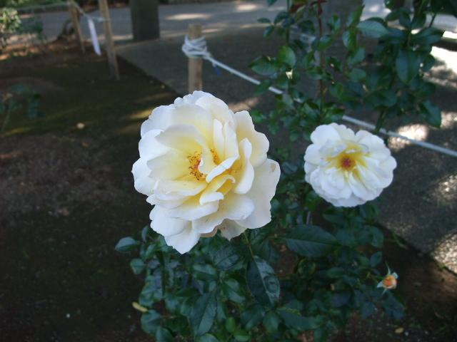Blog2012_10260019