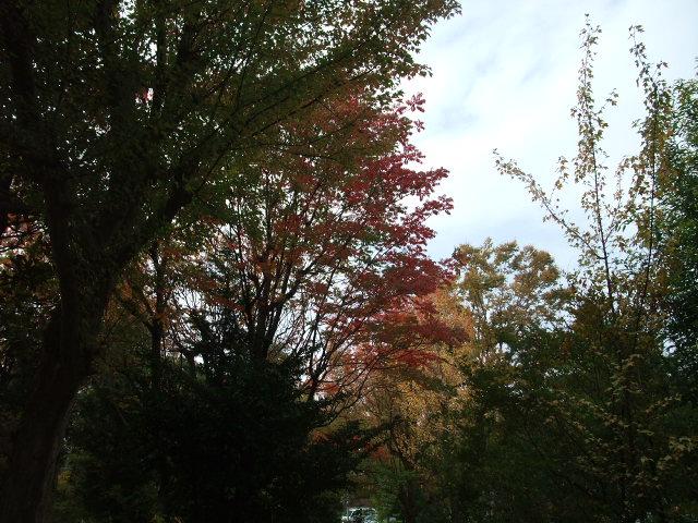 Blog2012_11130012
