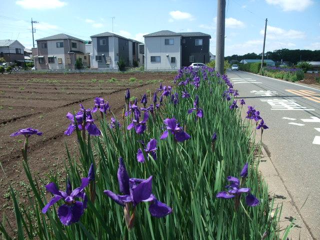 Blog2013_05120048