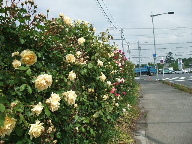 Blog2013_05130030