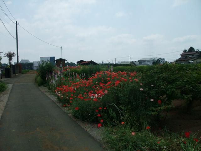 Blog2013_05270029
