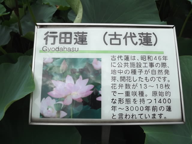 2013_07070049