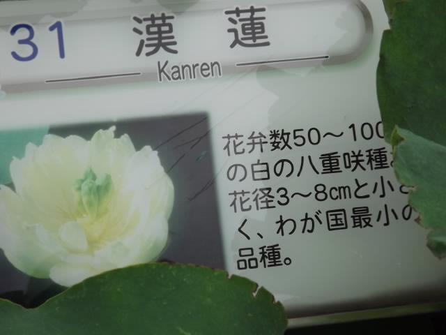 2013_07070066
