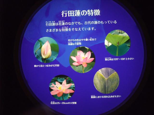 Blog2013_07070126