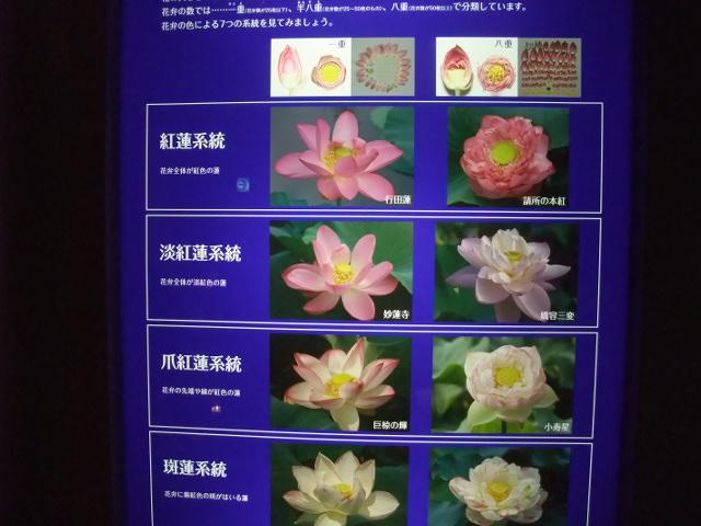 Blog2013_07070127