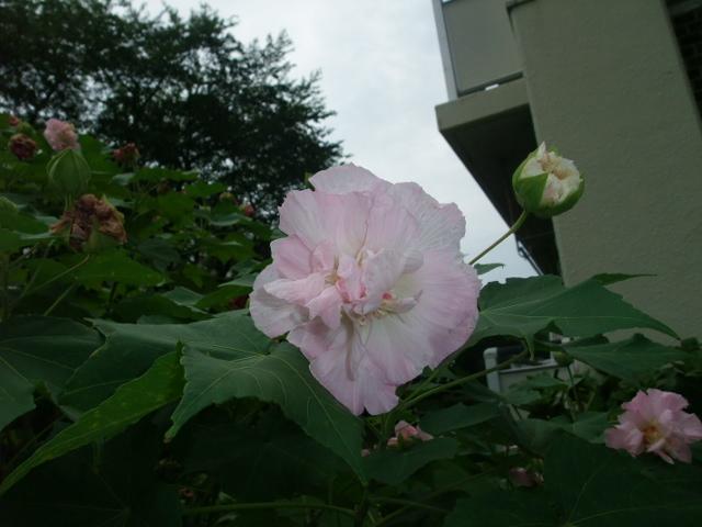 Blog2013_08260012